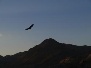 Eagle Adventure Tours - Muscle_Car_Bonneville_Canyonroute (24)